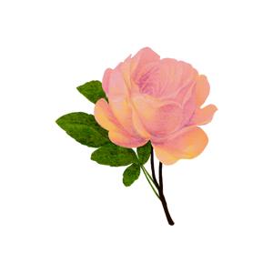 バラがモチーフのイマンの雑貨