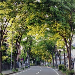 けやき並木の緑のアーチ