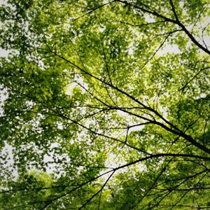 木の葉の間からこぼれる空