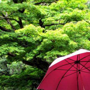 雨と傘と緑の季節